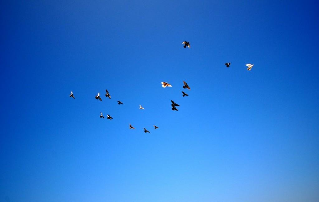 Gökyüzü bazen o kadar mavi olabiliyor ki !